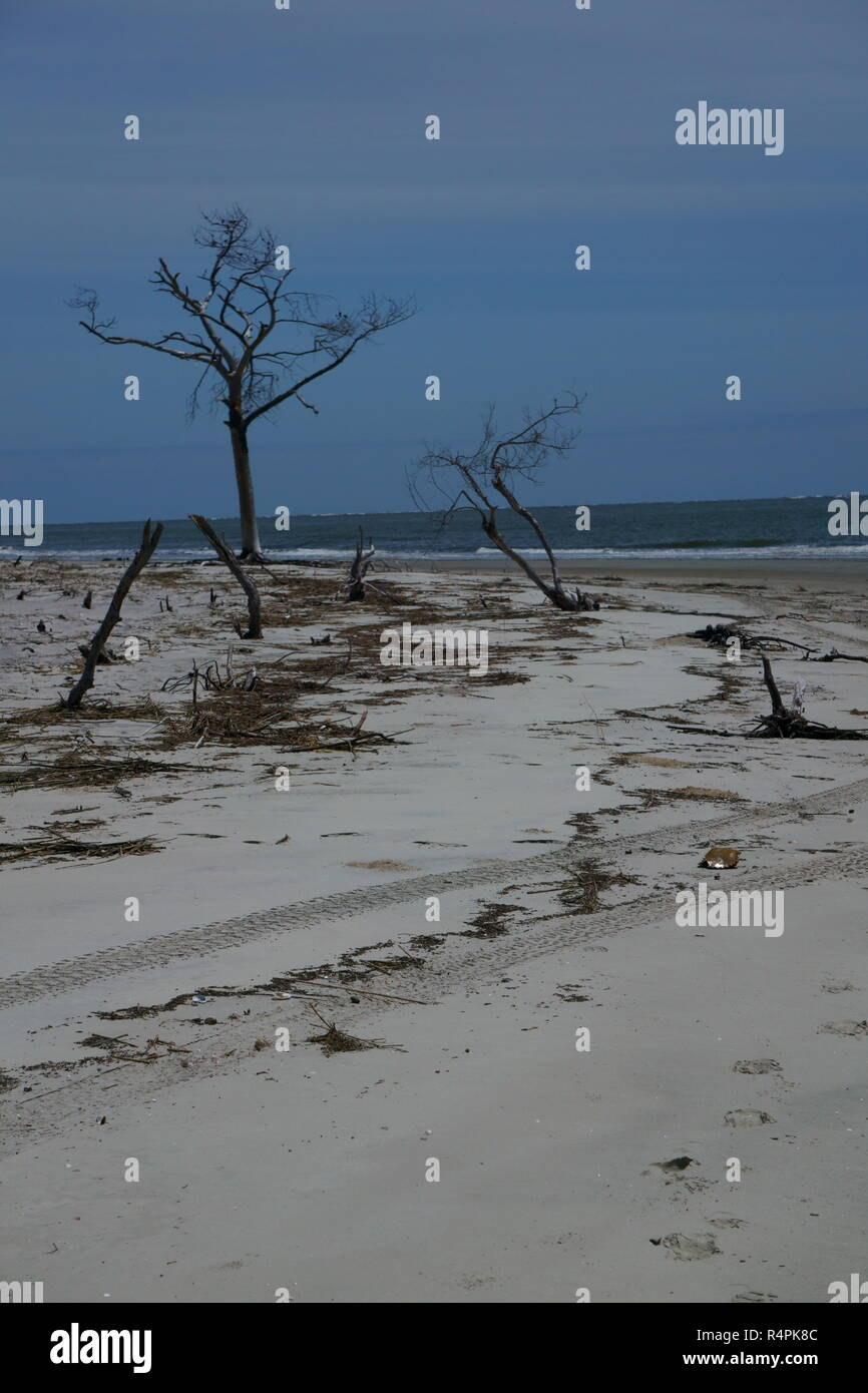 Surf pounding the Barrier Island sandy beaches trying to uproot the trees that are still standing upright! - Stock Image