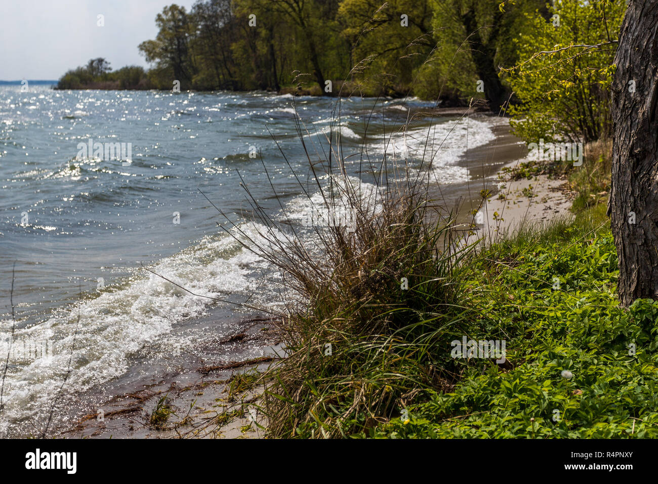 lake müritz - Stock Image