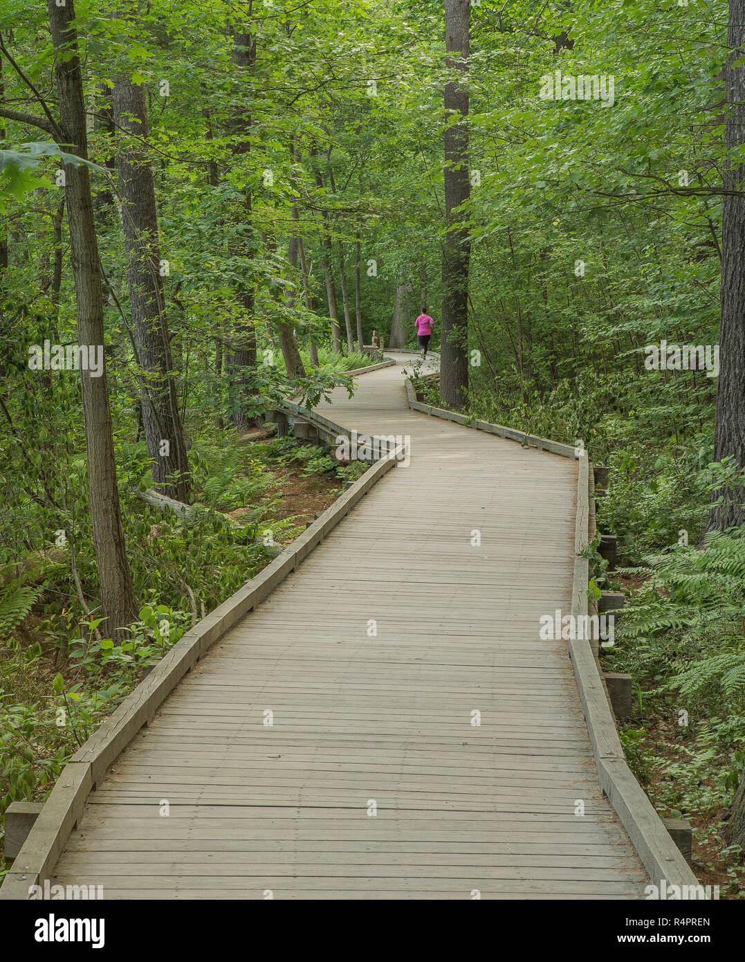 Woman in pink running trail at Dorr's Pond. (June). Livingston Park is located in Manchester NH's North End.Ball fields, playgrounds, outdoor pools. - Stock Image