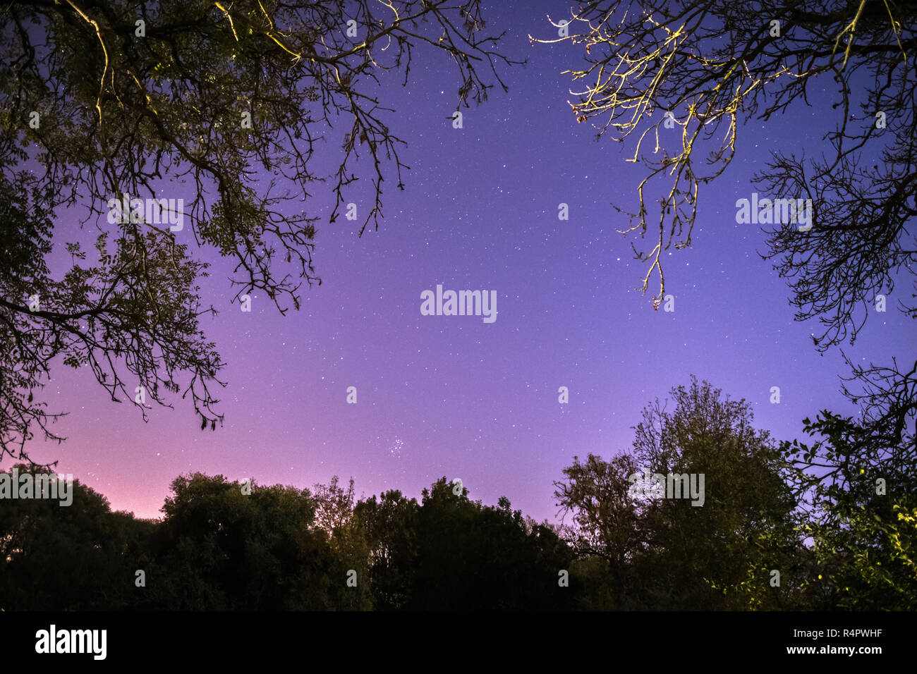 Colourful night sky dotted with stars framed by trees and branches - Stock Image