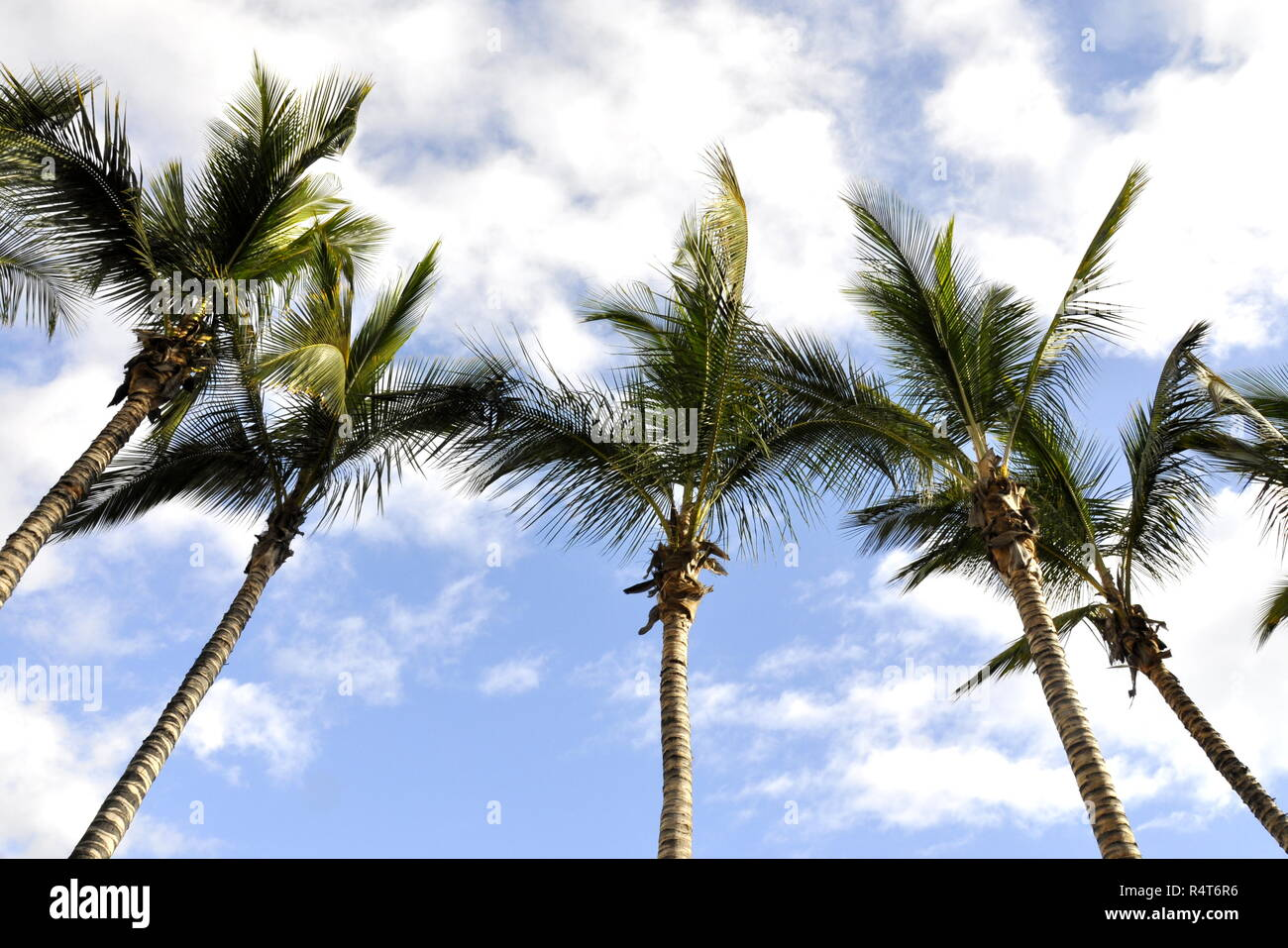 Palm trees against partly cloudy sky - Stock Image