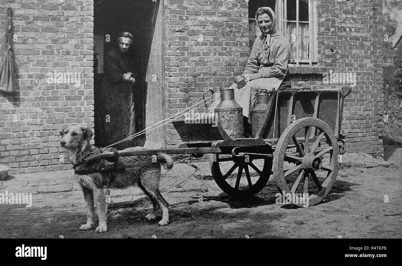 Dog Cart Stock Photos & Dog Cart Stock Images - Alamy