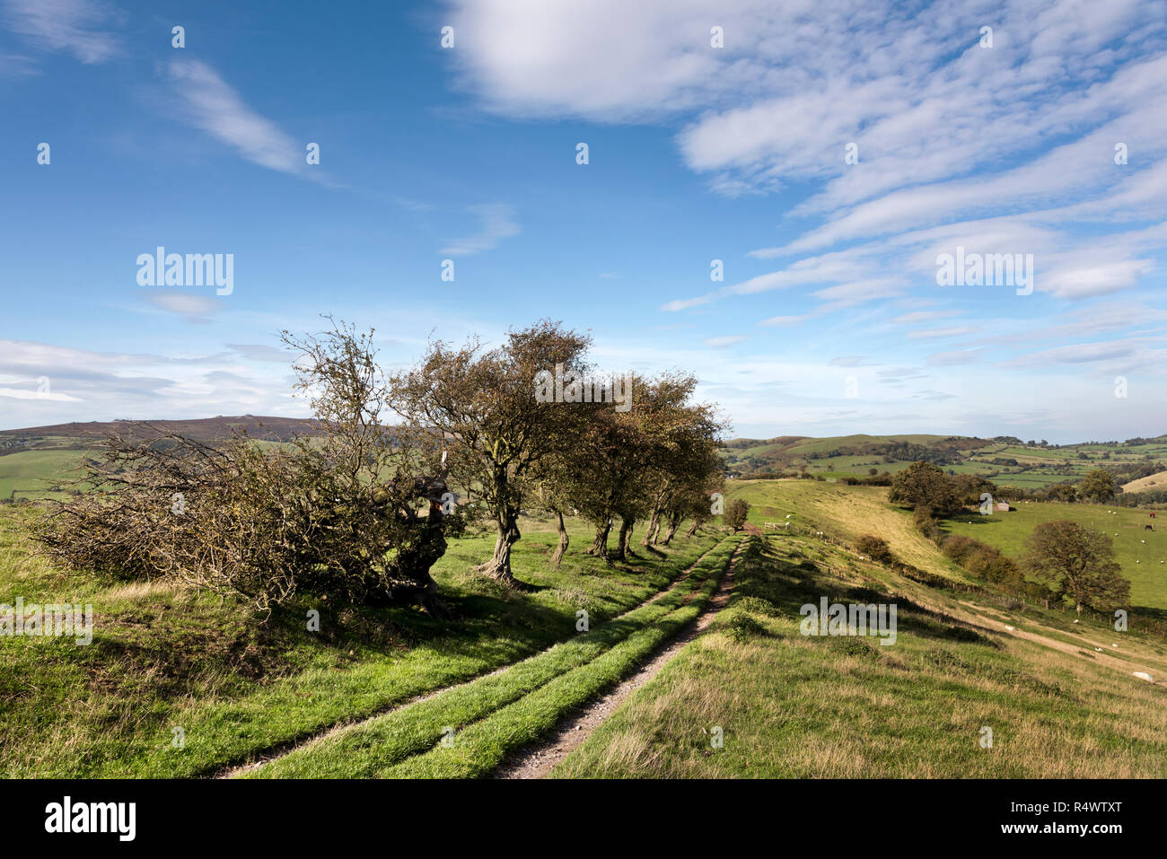 Adstone Hill on The Shropshire Way long-distance path, Shropshire Hills Area of Outstanding Natural Beauty, near Bridges, Shropshire - Stock Image