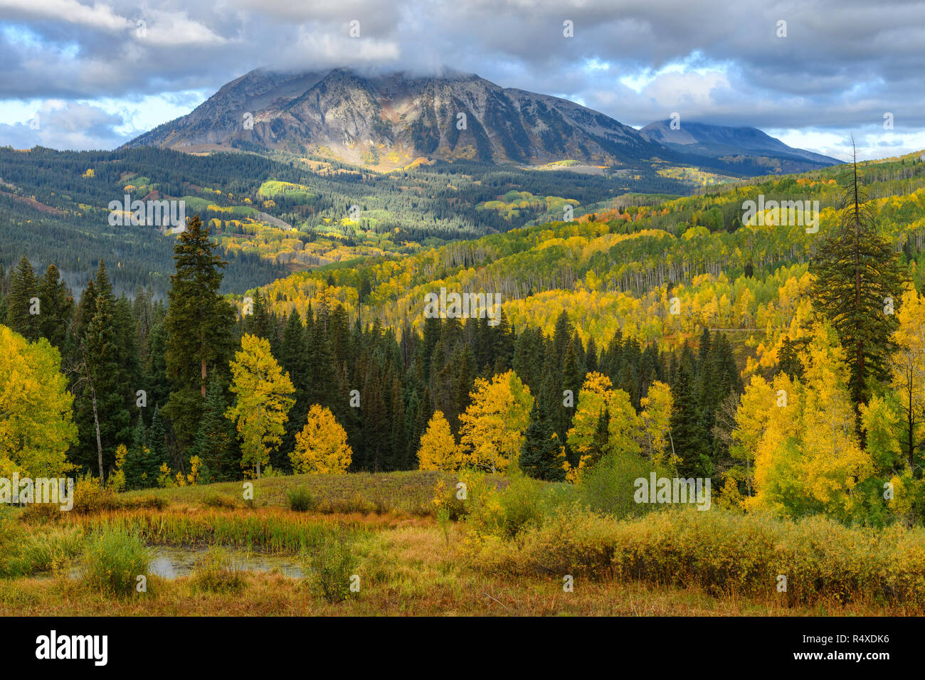 North America, American, USA, Rocky Mountains, Colorado, Crested Butte, Gunnison National Forest, Kebler Pass - Stock Image