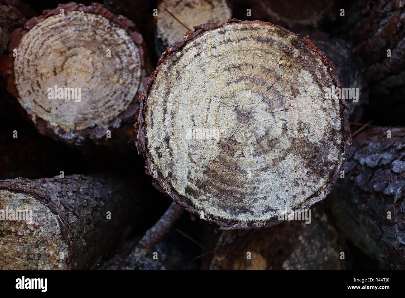 An abstract photograph depicting chopped wood going through the seasoning process before being burnt to provide wamth during the Winter. - Stock Image