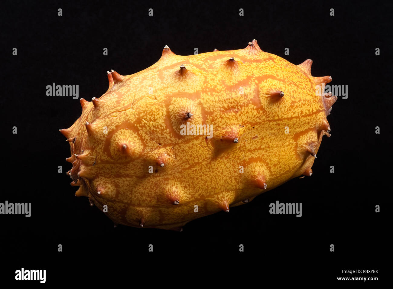 An uncut kiwano (horned melon) isolated on a black background. - Stock Image