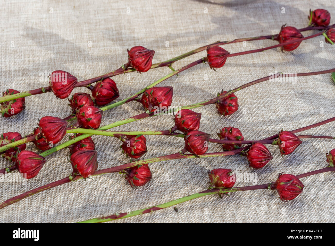edible hibiscus calyxes for sale at the farmers market sitting on a cloth covered table - Stock Image