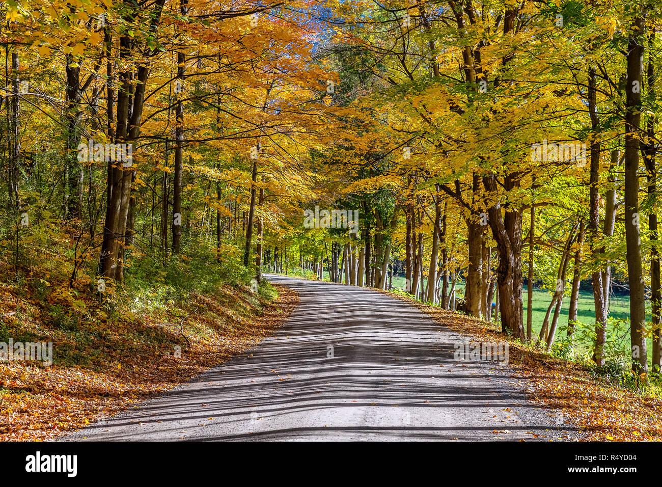 Unpaved country road winds through colorful autumn foliage, Middlebury, Vermont, USA. - Stock Image