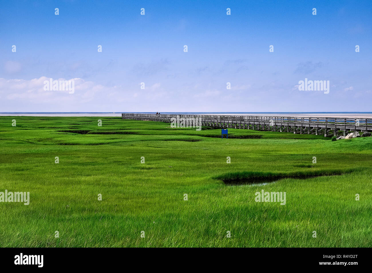 Salt marsh boardwalk at Gray's Beach, Yarmouth, Cape Cod, Massachusetts, USA. - Stock Image