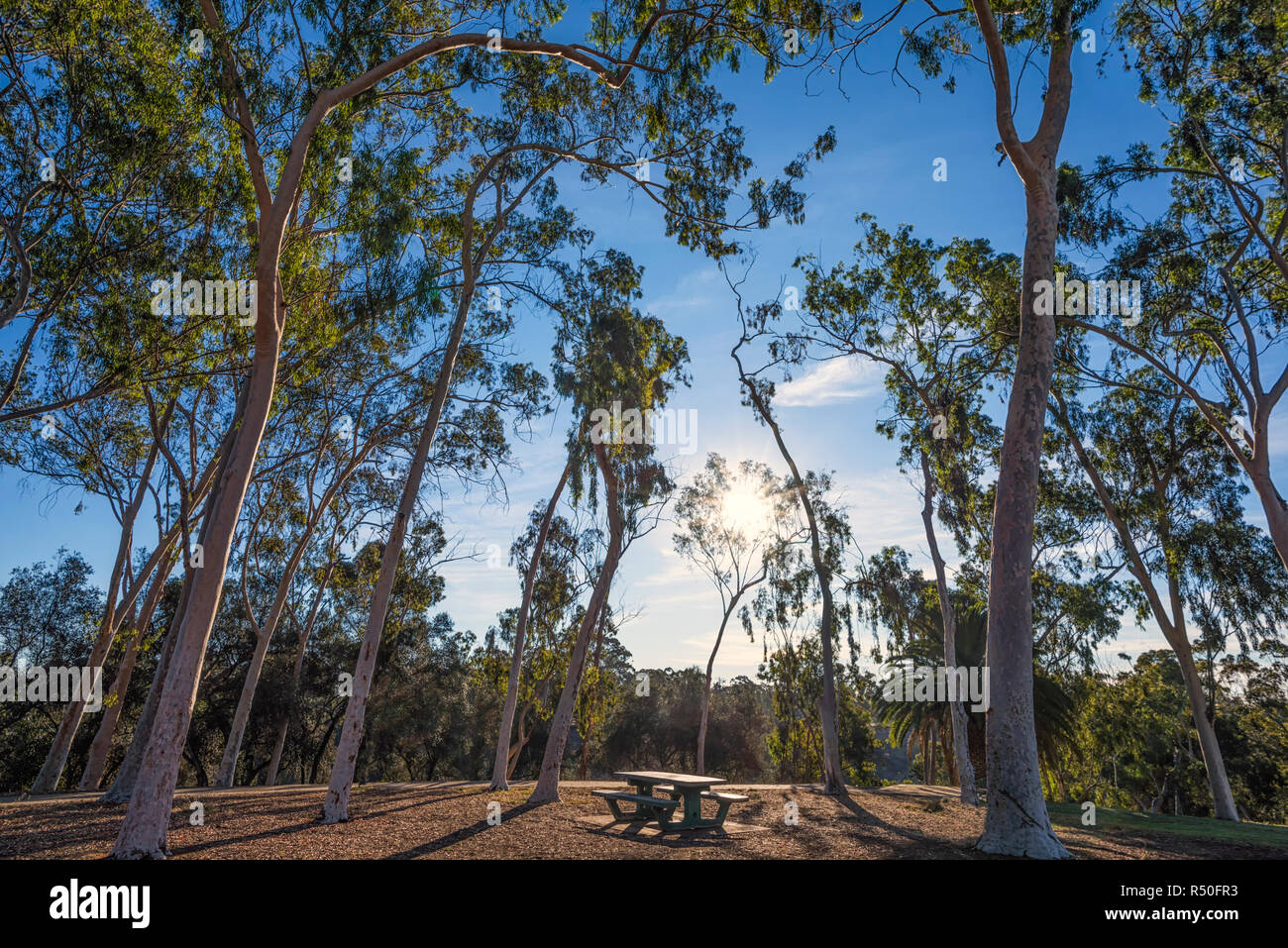 Grove of trees and a public bench with morning light. Balboa Park, San Diego, California, USA. Stock Photo