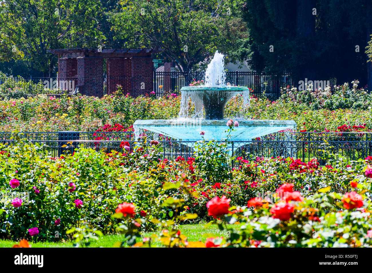 Water Fountain Surrounded By Beautiful Roses The Municipal Rose