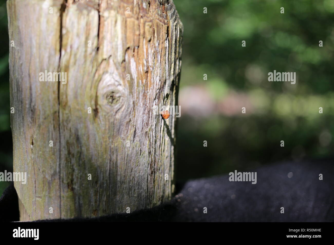 Closeup of wooden fence post. - Stock Image