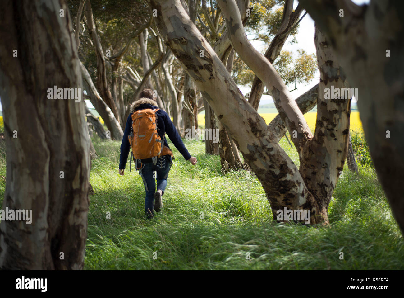 Female backpacker wandering around the forest - Stock Image