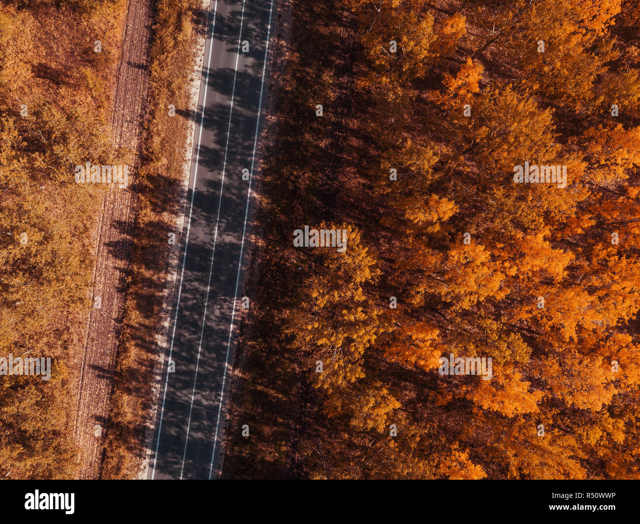 Aerial view of empty road through forest in autumn, indian summer scenery from drone point of view - Stock Image