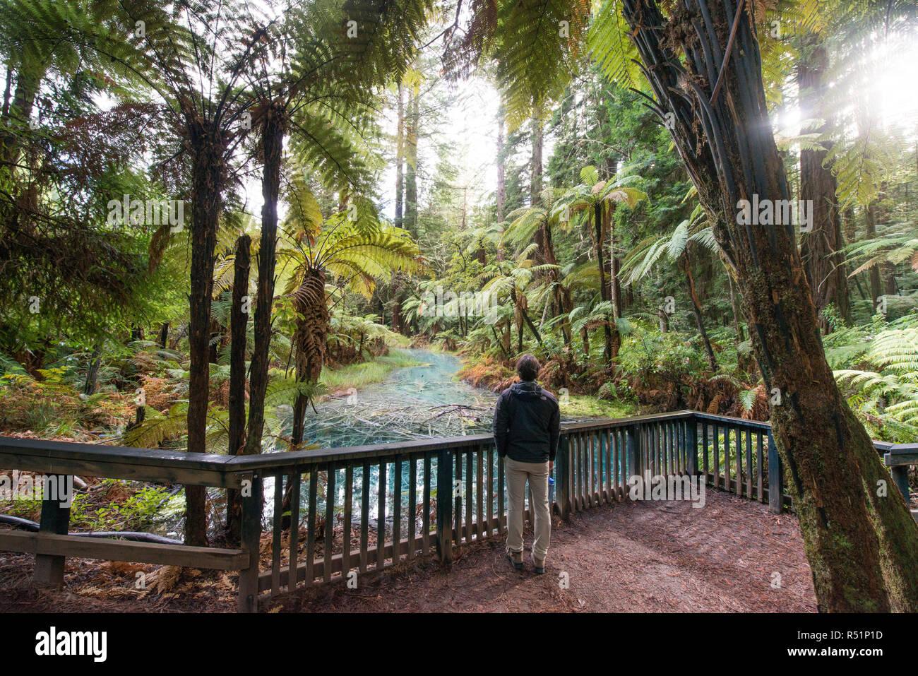 Rotorua Redwood Forest walk - Stock Image
