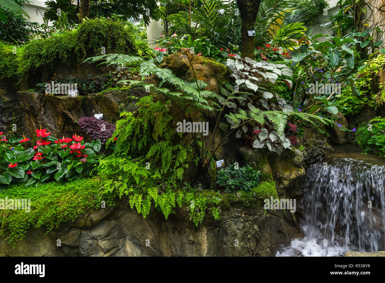 Forsgate Conservatory at the Hong Kong Park showing tropical plants and jungle foliage in the Humid Plant House - Stock Image