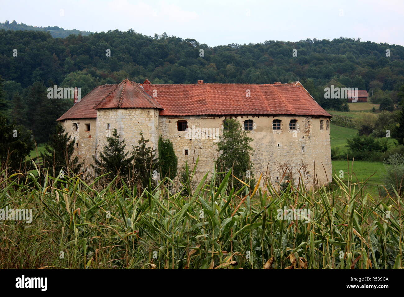 Old town castle Ribnik used as defense against enemies from thirteenth century surrounded with dense forest in background and cornfield in front - Stock Image