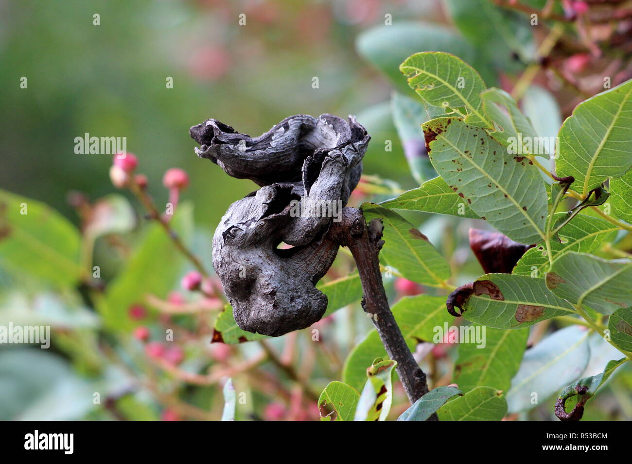 Tree branch with bark shaped like small dragon looking at sky surrounded with green leaves, flowers and other garden vegetation on warm sunny day - Stock Image