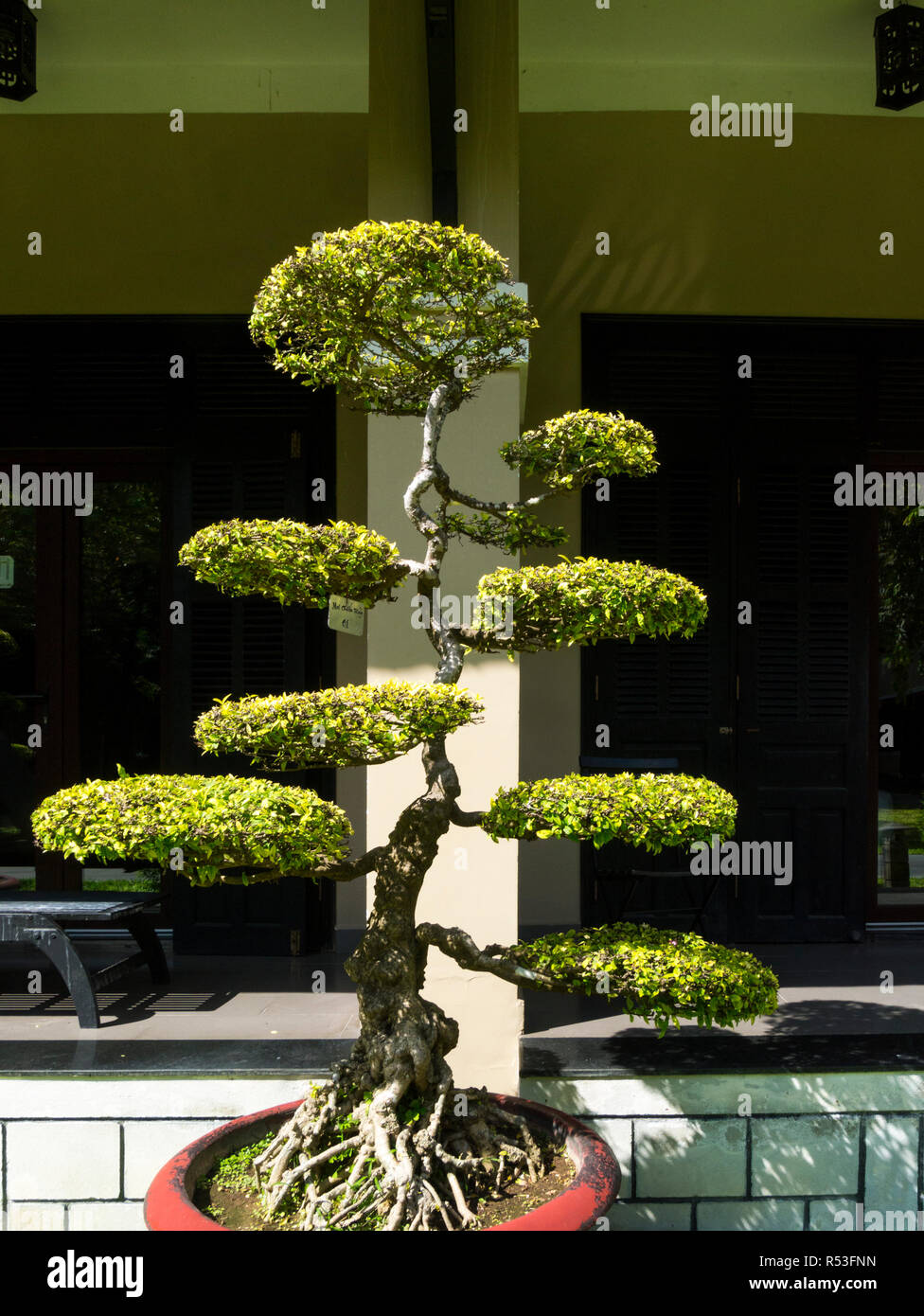 Bonsai Form Stock Photos Images Alamy Wiring Schefflera Lovely Example Of A Mature Tree Japanese Art Using Cultivation Techniques To Produce