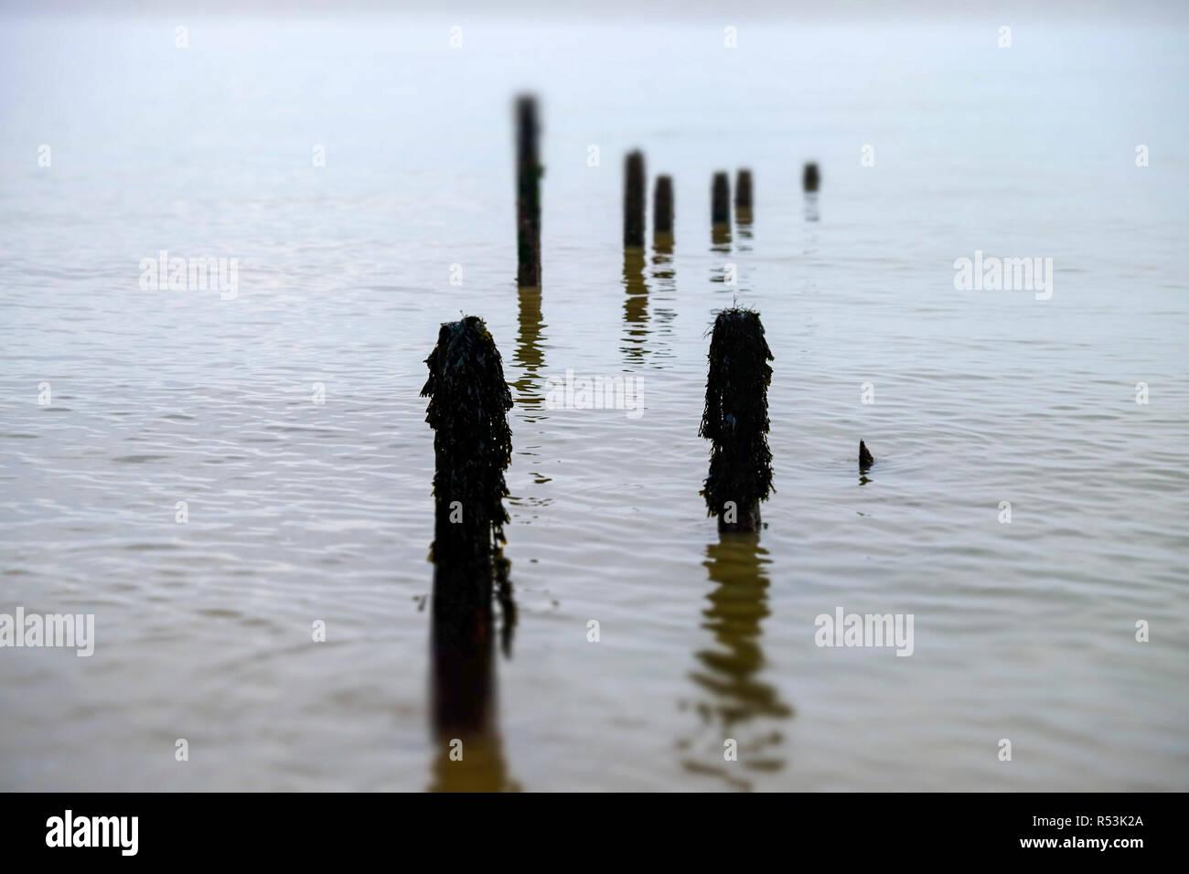 Wooden breakwaters - Stock Image