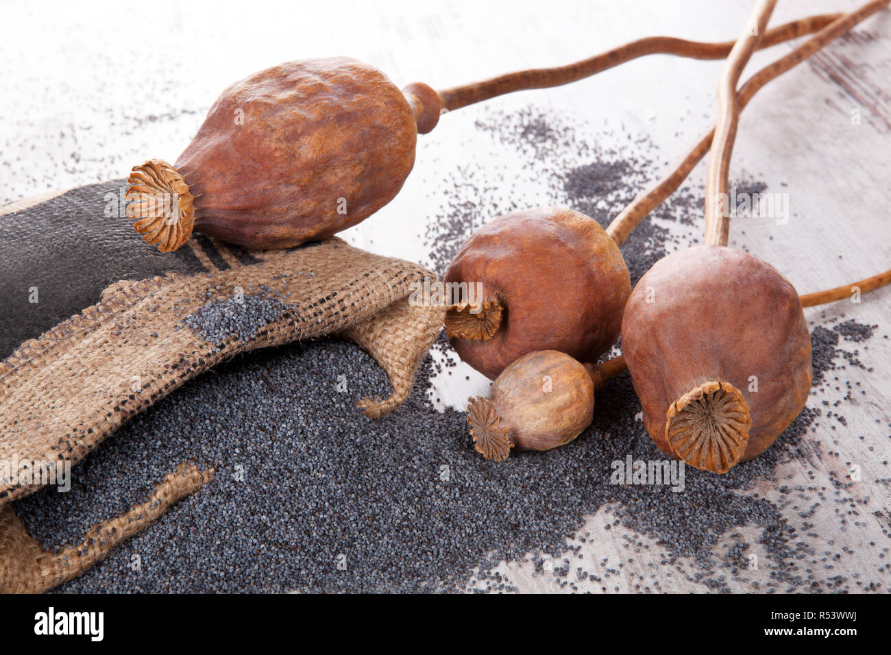 Poppy seeds and heads. - Stock Image