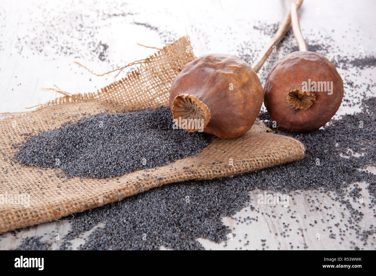 Dry poppy heads and seeds. - Stock Image