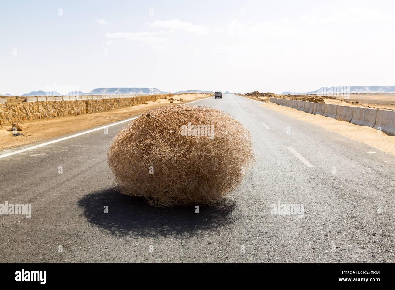 Giant tumbleweed on the highway with sandy dunes, between el-Bahariya oasis and Al Farafra oasis, Western Desert of Egypt. Sahara. - Stock Image