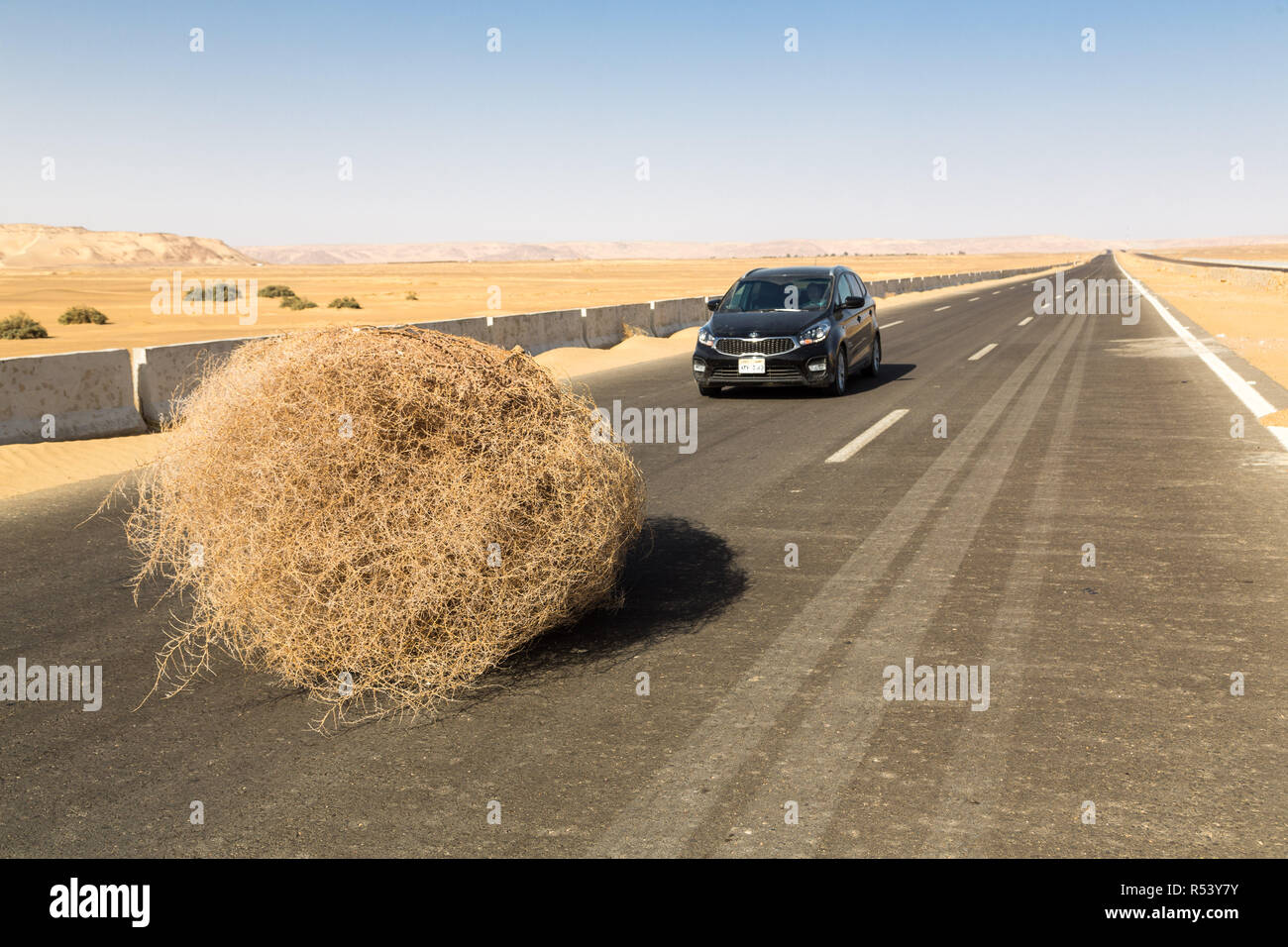 A car stopped by a giant tumbleweed on a highway with sandy dunes, between Bahariya oasis and Farafra, Sahara, Western Desert of Egypt. - Stock Image