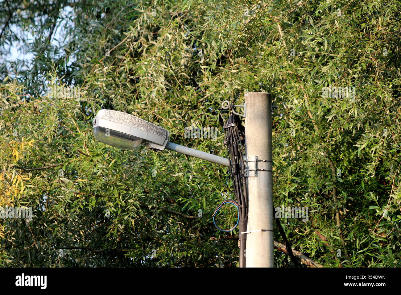Large old street lamp mounted on concrete utility pole with connected multiple black electrical wires and dense trees and leaves in background - Stock Image