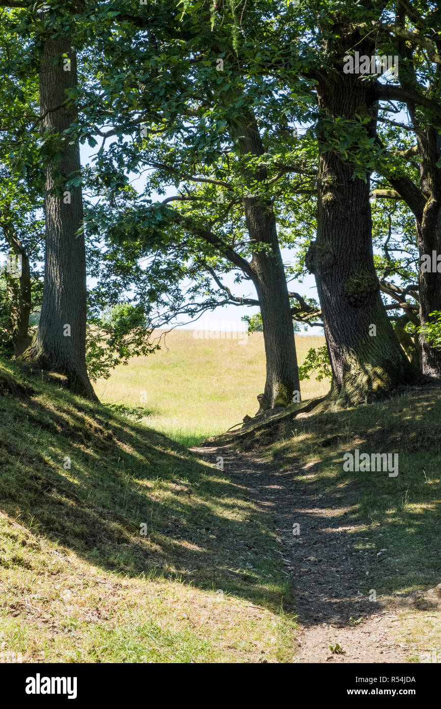 Shade underneath trees on a path through countryside fields on a hot day in Summer, Derbyshire, England, UK - Stock Image