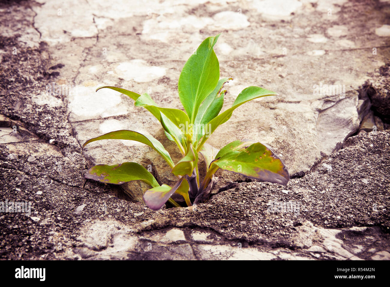 Small plant was born in an improbable place - power of life concept image - toned image - Stock Image