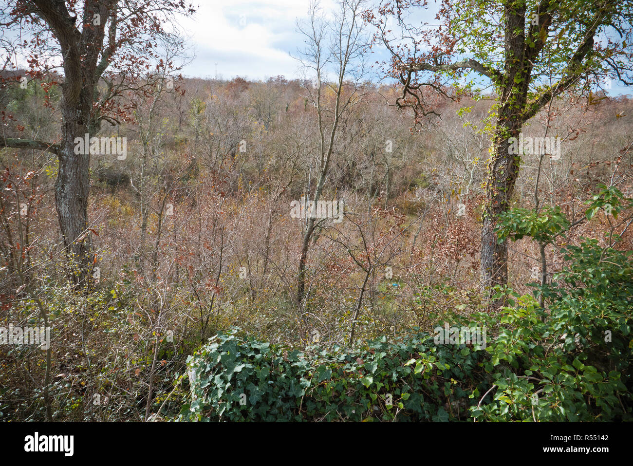 Murgia oaks forest in the morning of autumn - Stock Image