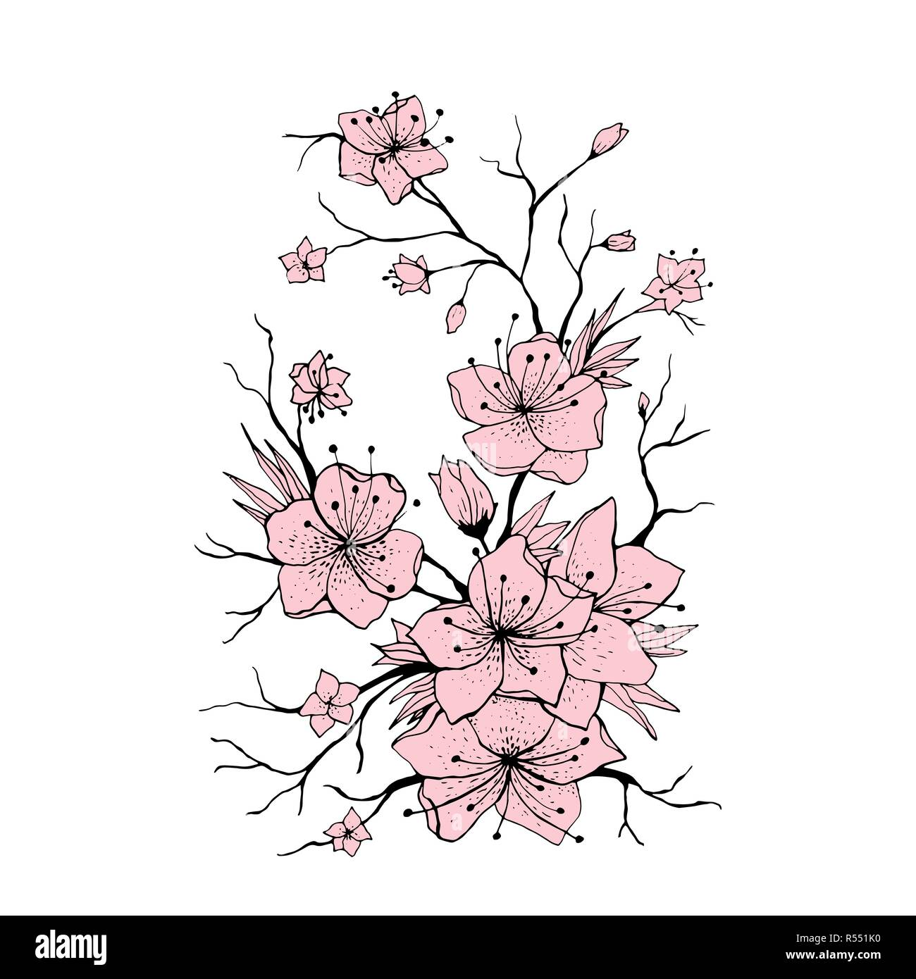 Sakura branch hand drawn illustration. Japanese Cherry tree twig. Pink flowers and buds on white background. Sakura branch with cherry blossom. Poster, logo floral design element. Isolated vector - Stock Vector