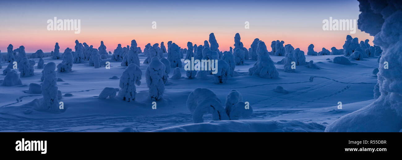 A crest of the Riisitunturi National Park mountain and a stand of Tykkylomu spruce trees silhouetted against the horizon. Intense minus 25C cold and a Stock Photo
