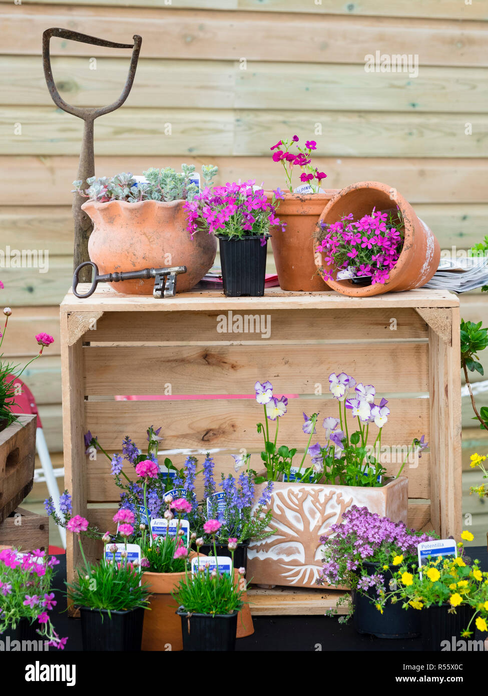 Part of the plant display on The Garden House stand at Devon County Show 2018 - Stock Image