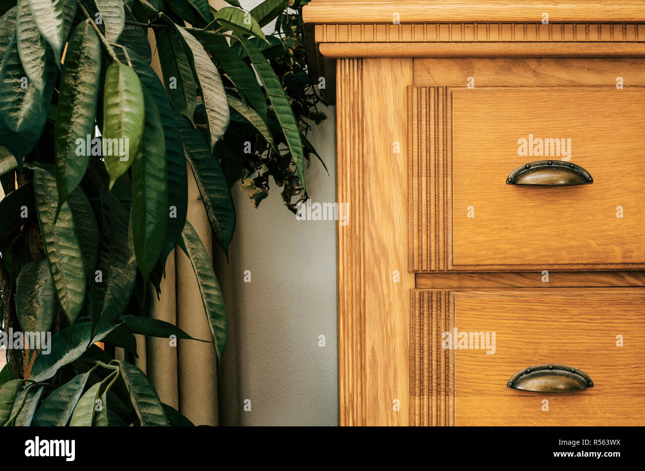 Brown closet with green house plant close-up background texture home interior - Stock Image