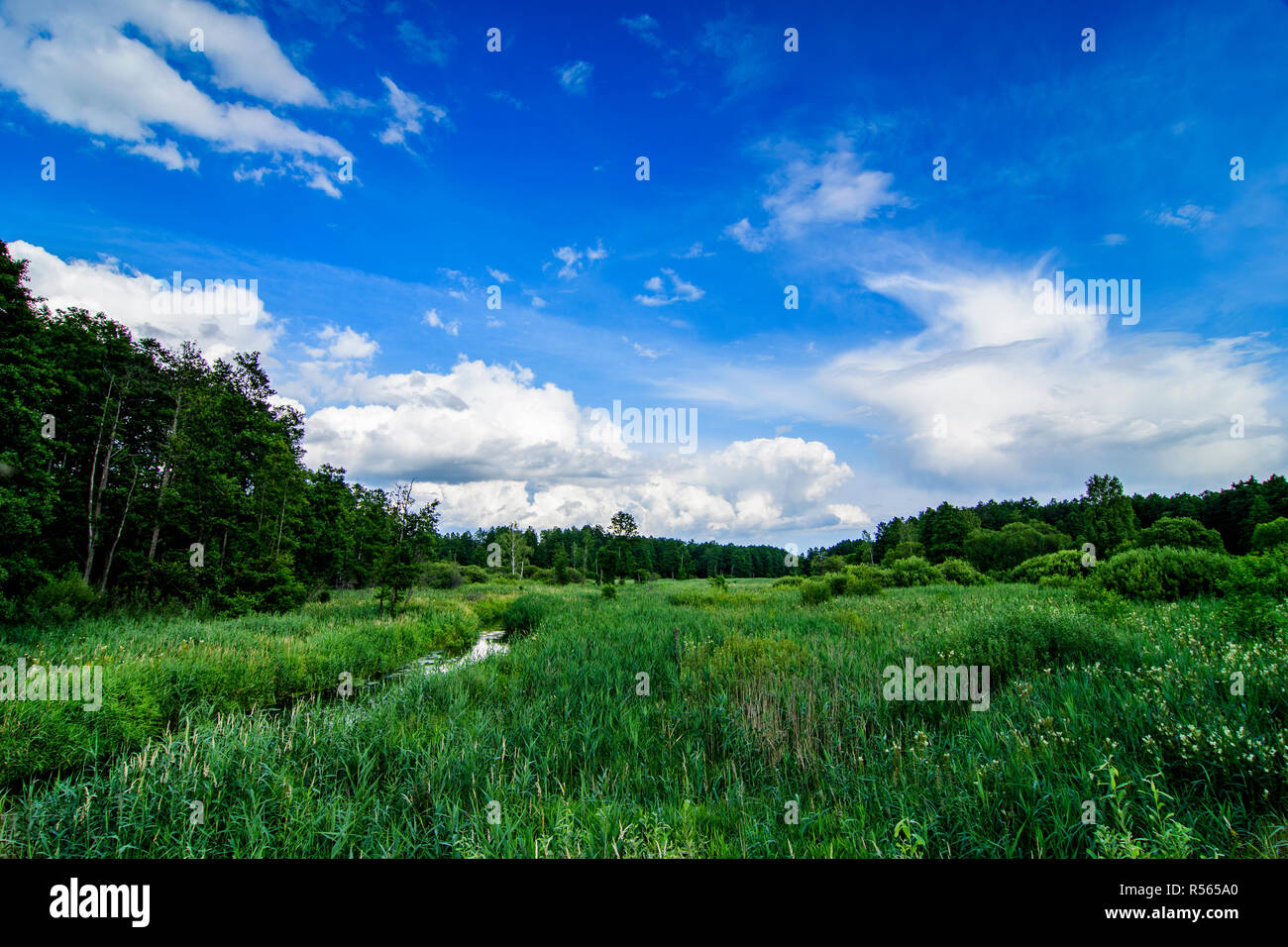 Narewka river valley in Bialowieza National Park. July, 2017. - Stock Image