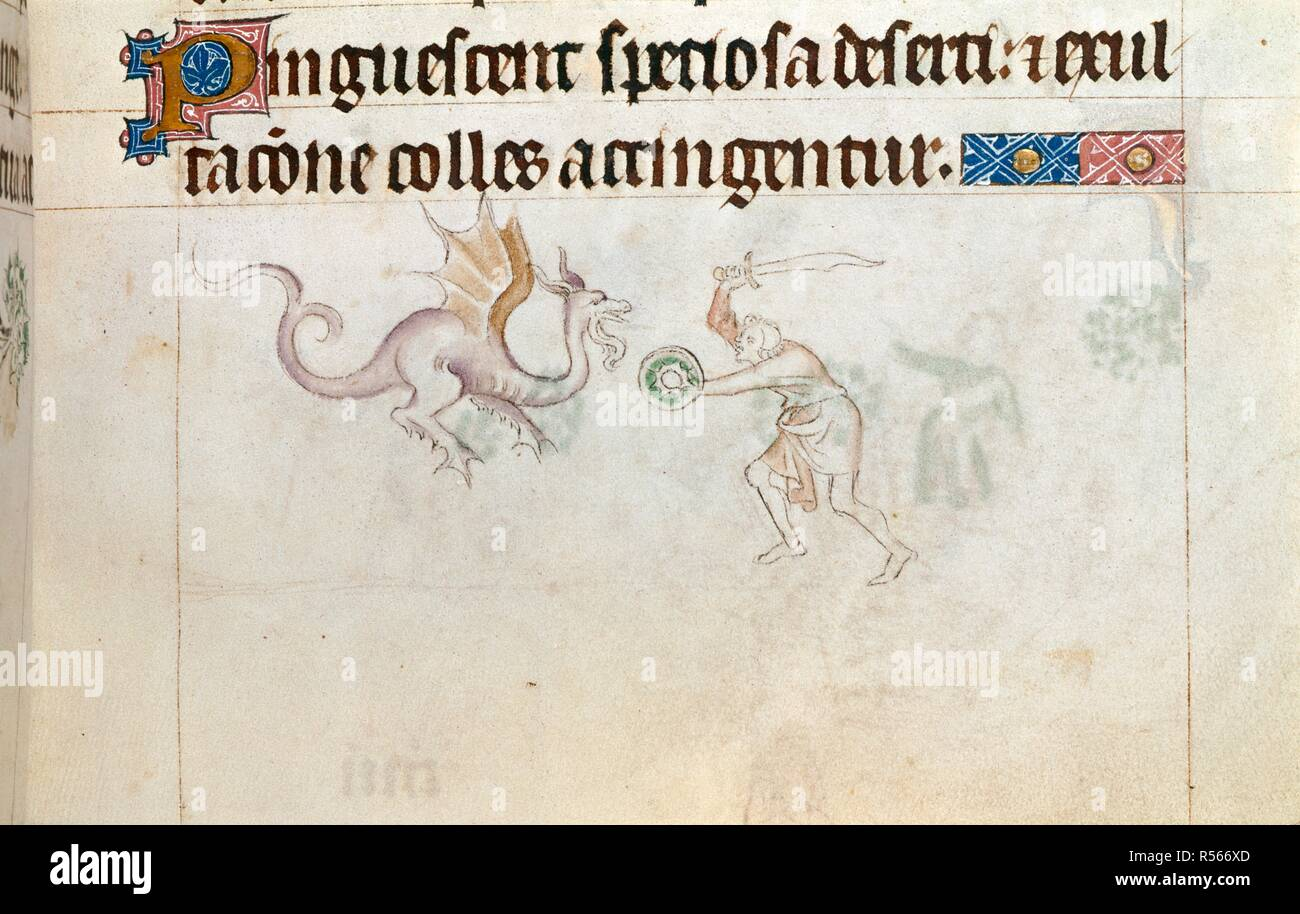 Man fighting a dragon. Queen Mary Psalter. England (London?); circa 1310-1320. (Miniature only) Bas-de-page scene showing a man, with sword and small round shield, fighting a dragon.  Image taken from Queen Mary Psalter.  Originally published/produced in England (London?); circa 1310-1320. . Source: Royal 2 B. VII, f.163. Language: Latin. Stock Photo
