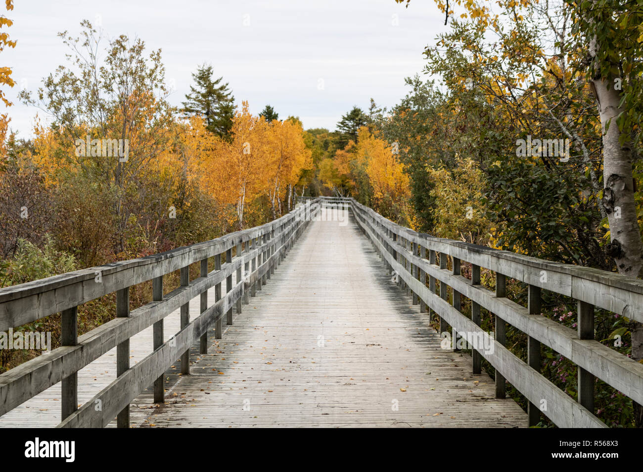 old wooden bridge in the woods during autumn Stock Photo