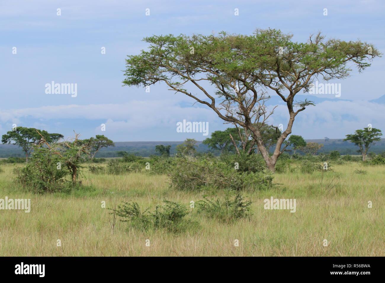 Landschaft Sawanne im Ishasha Nationalpark Uganda Ostafrika - Stock Image