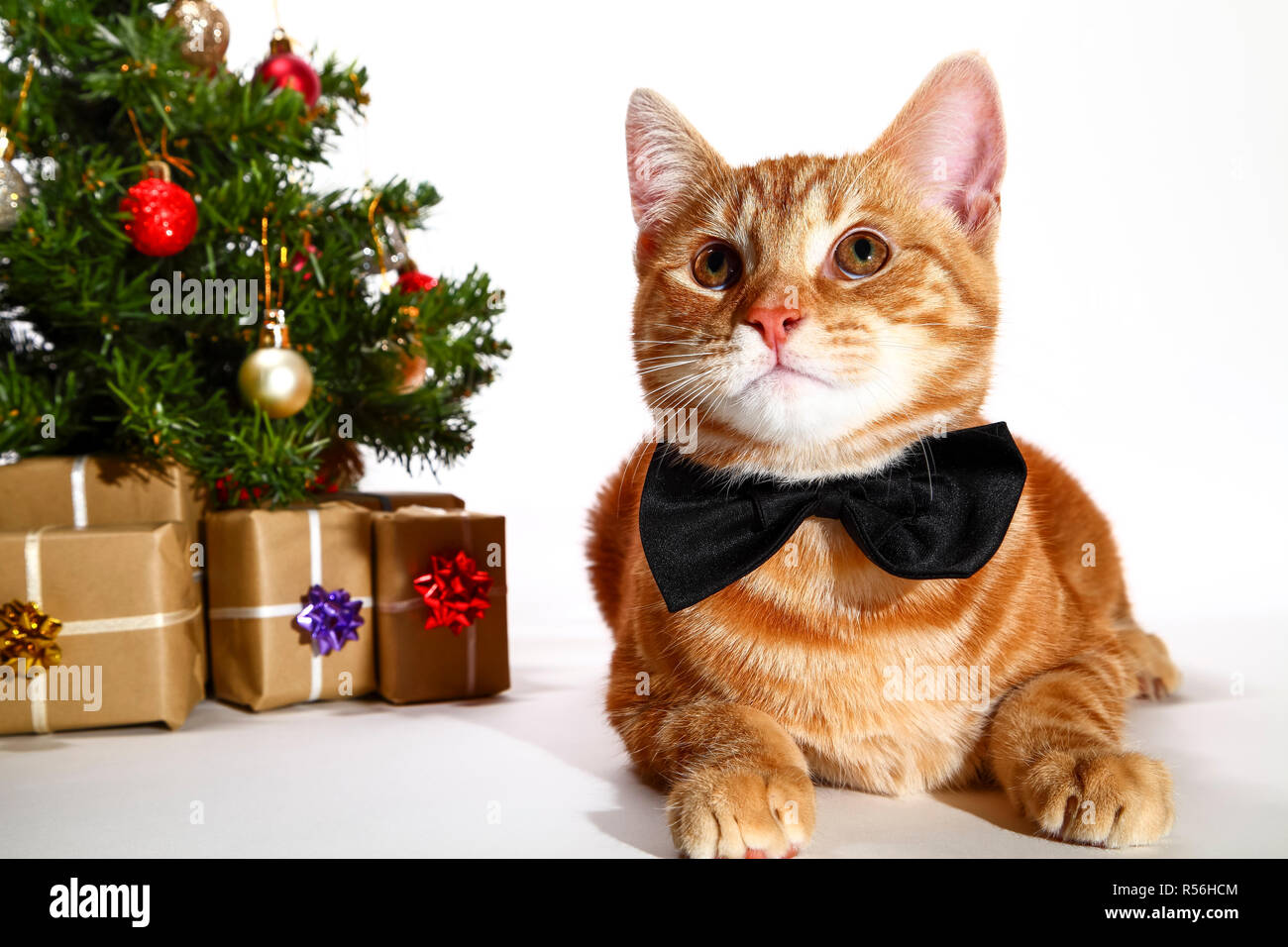 Mackerel tabby kitten wearing a bow tie posing at the side of a christmas tree and xmas presents - Stock Image