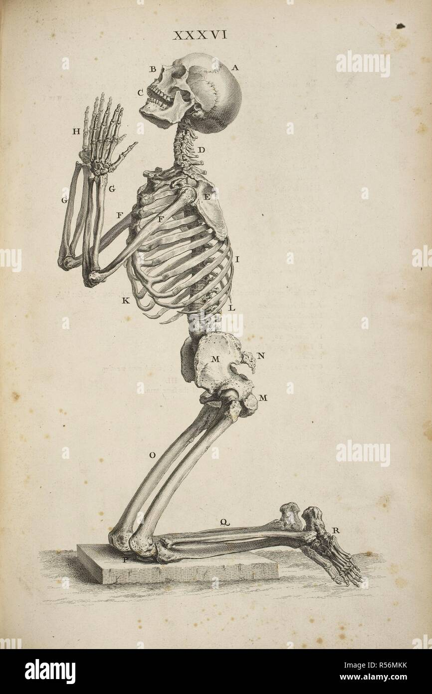 A Human Skeleton Kneeling In The Posture Of Prayer Osteographia Or