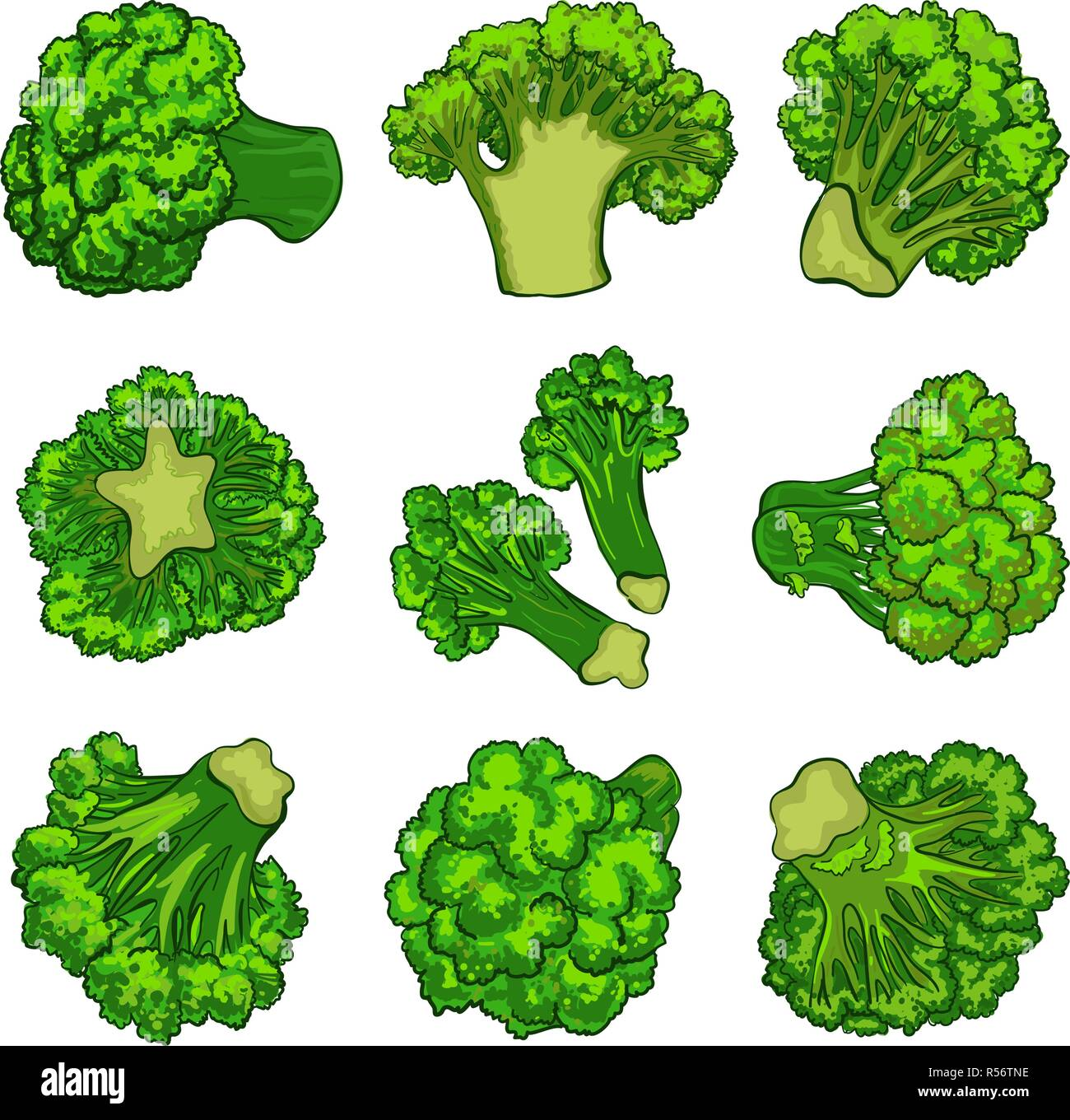 broccoli icon set cartoon set of broccoli vector icons for web design stock vector image art alamy https www alamy com broccoli icon set cartoon set of broccoli vector icons for web design image226959194 html