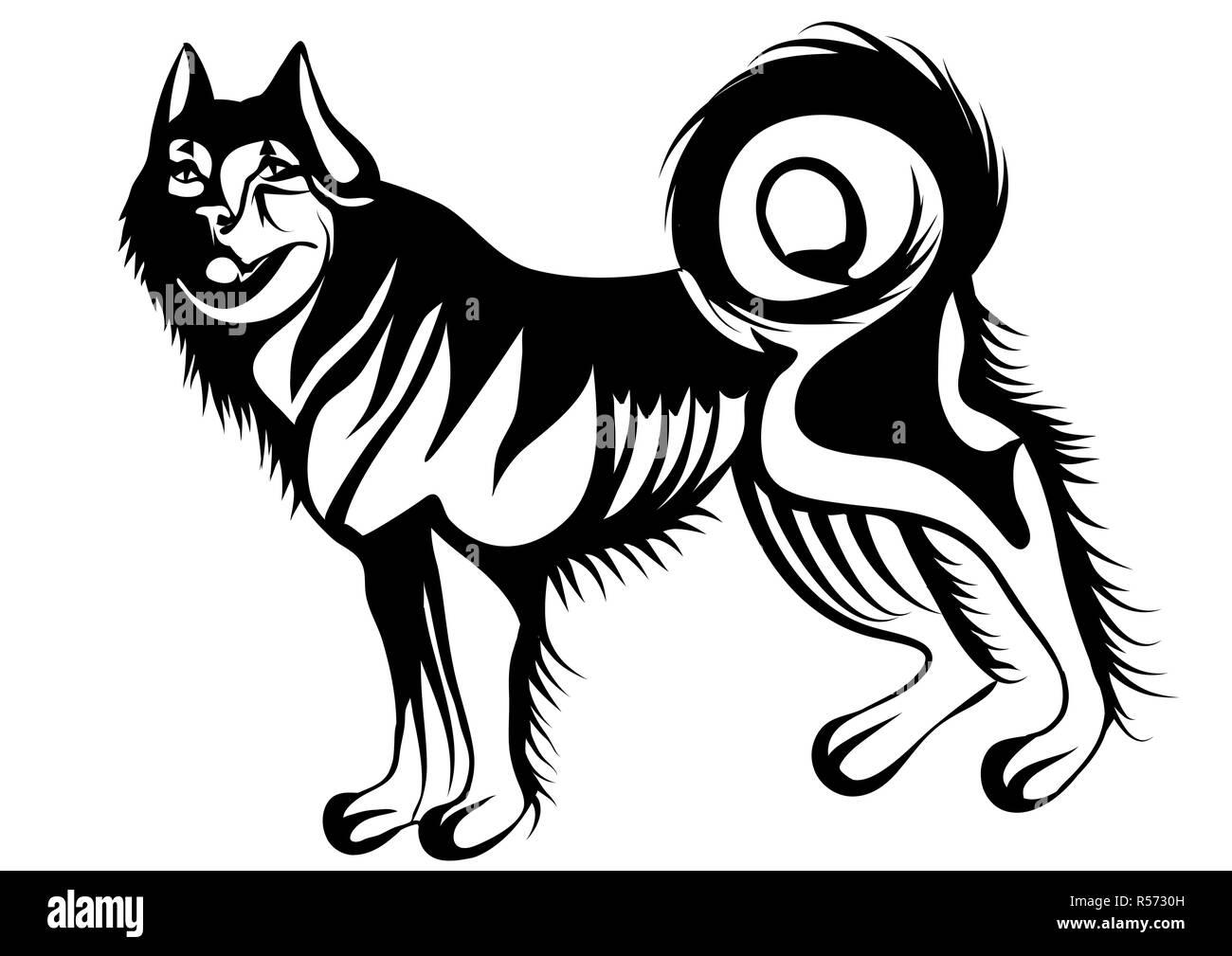 husky - Stock Image