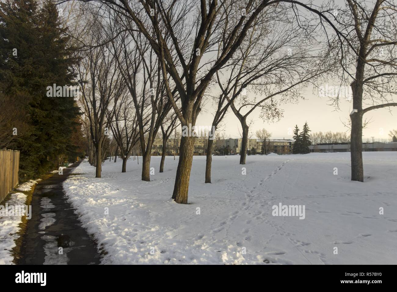 Lonely Path in snowy park and barren aspen tree branches in late Fall near Market Mall in City of Calgary Alberta Canada - Stock Image