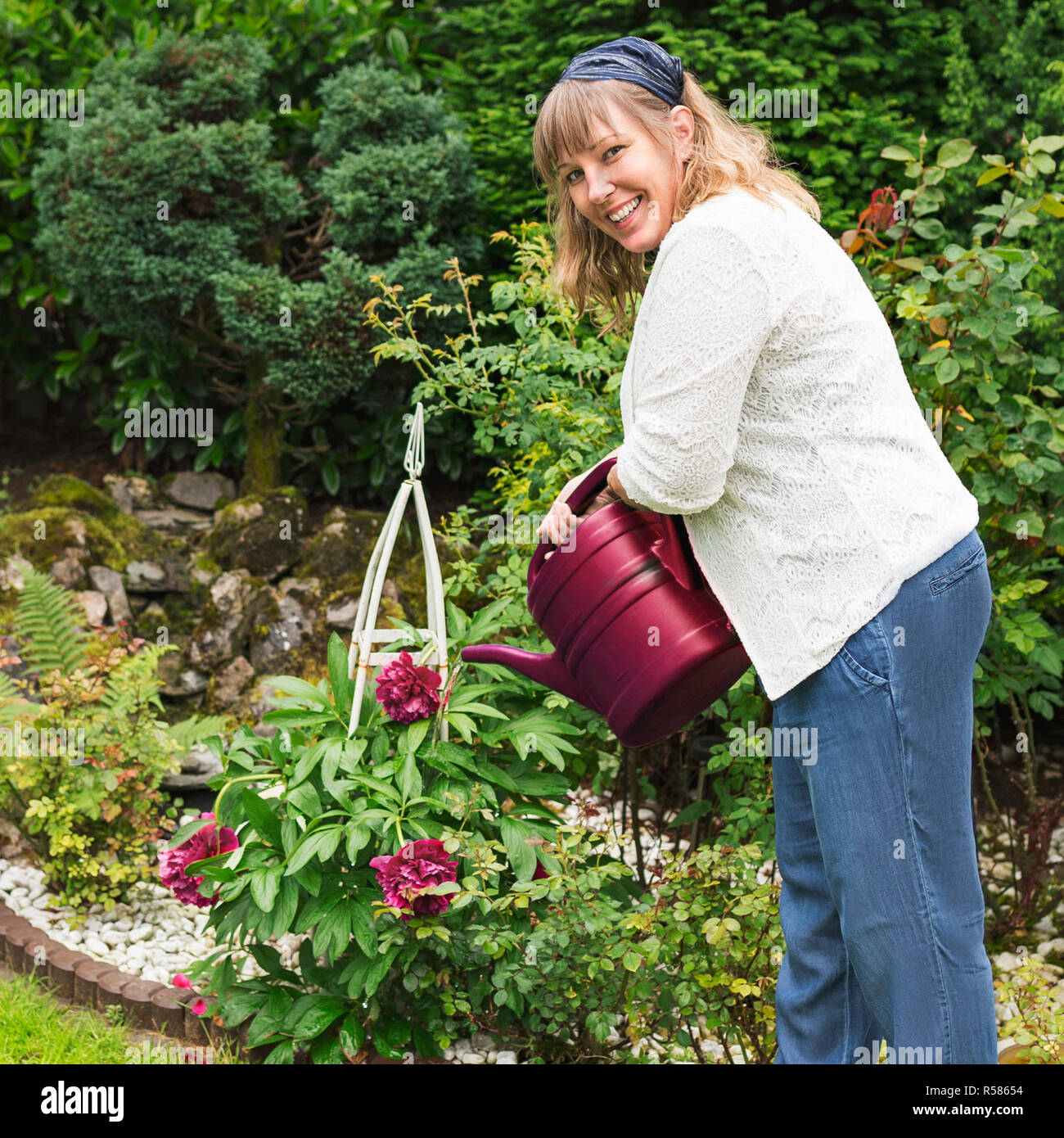 gardening nice woman pours peonies in the garden - Stock Image