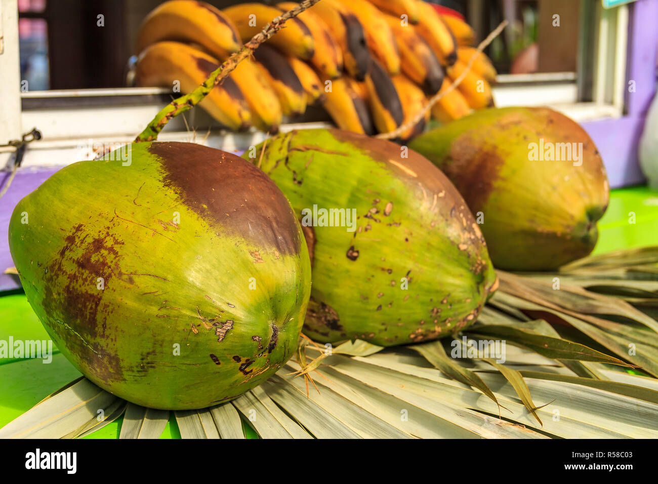 3 Fresh Green Ripe Coconuts Ready To Be Cracked Open For