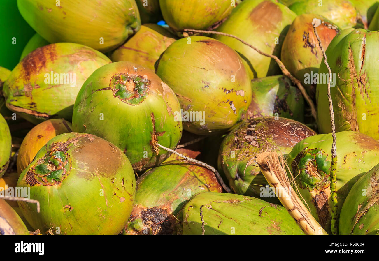 Pile of fresh green ripe coconuts ready to be cracked open for coconut water in the Bahamas Stock Photo