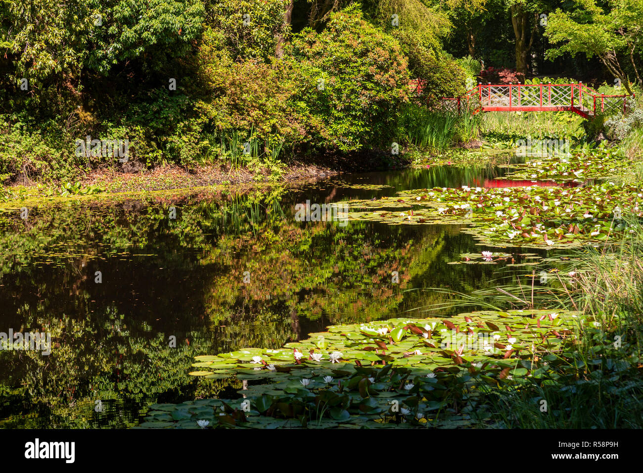 Lily pond and bridge at Portmeirion, North Wales Stock Photo