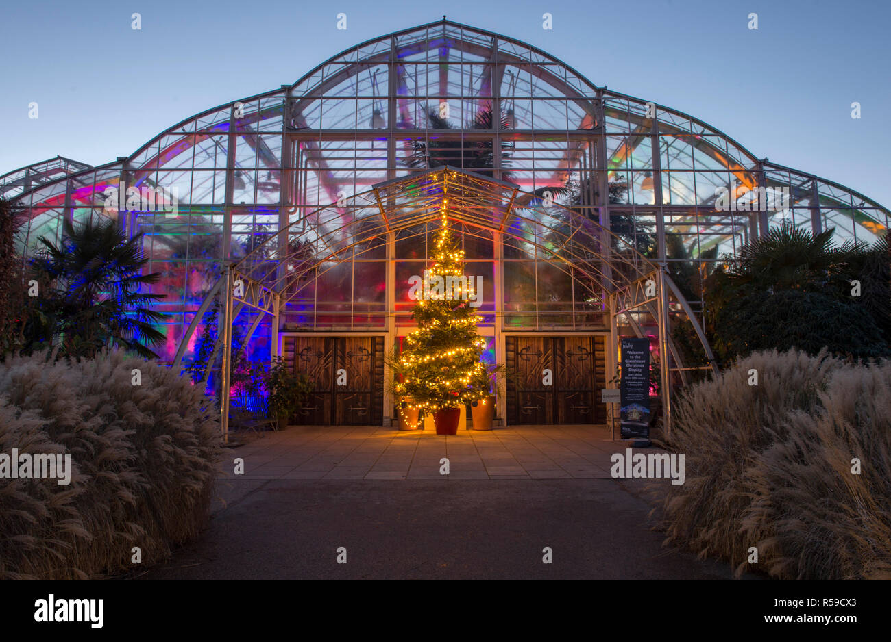 RHS Wisley, Surrey, UK. 30 November, 2018. Spectacular botanically-inspired illuminations by Jigantics switch on at RHS Wisley and open to the public from 4pm-8pm, 1st December 2018 - Wednesday 2 January 2019 for the festive holiday season. Image: Woodland realm Christmas display with Christmas Tree at the Glasshouse entrance. Credit: Malcolm Park/Alamy Live News - Stock Image